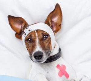 transport vétérinaire urgence 24h/24h